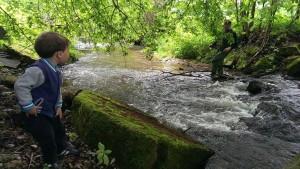 Wald Blog News